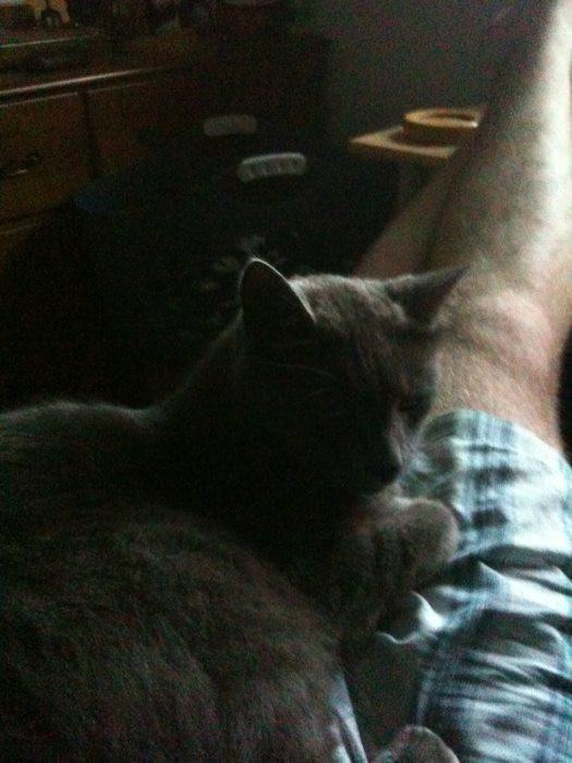 Tak cuddled on my lap