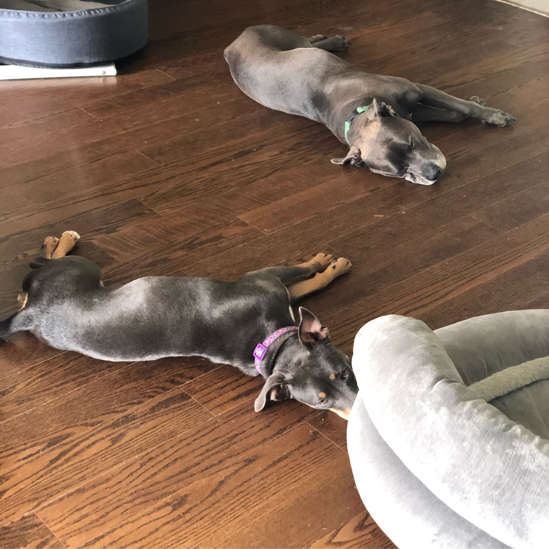 Hugo and Luna are too tired to make it to the bed