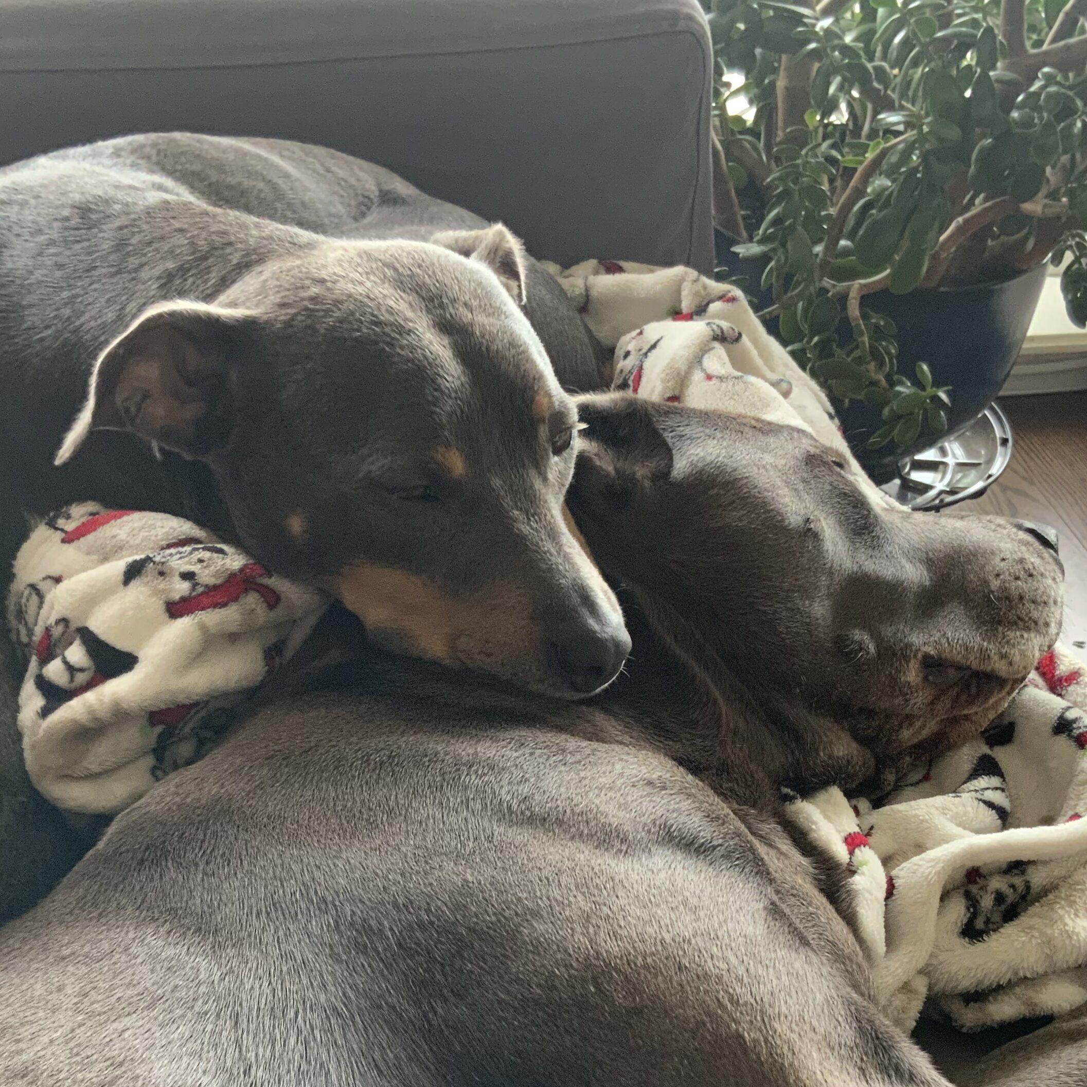 Luna using Hugo's head as a pillow